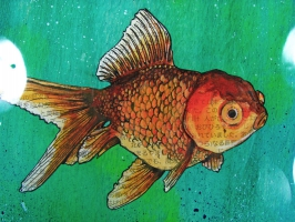 goldfish-closeup
