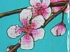 cherry-blossom-closeup