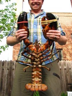 jumbo-lobster20120506_0006