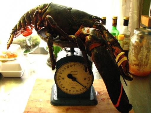 jumbo-lobster20120506_0008