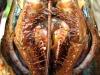 jumbo-lobster20120506_0005